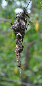 wild_wings_swampy_things_gerygone nest