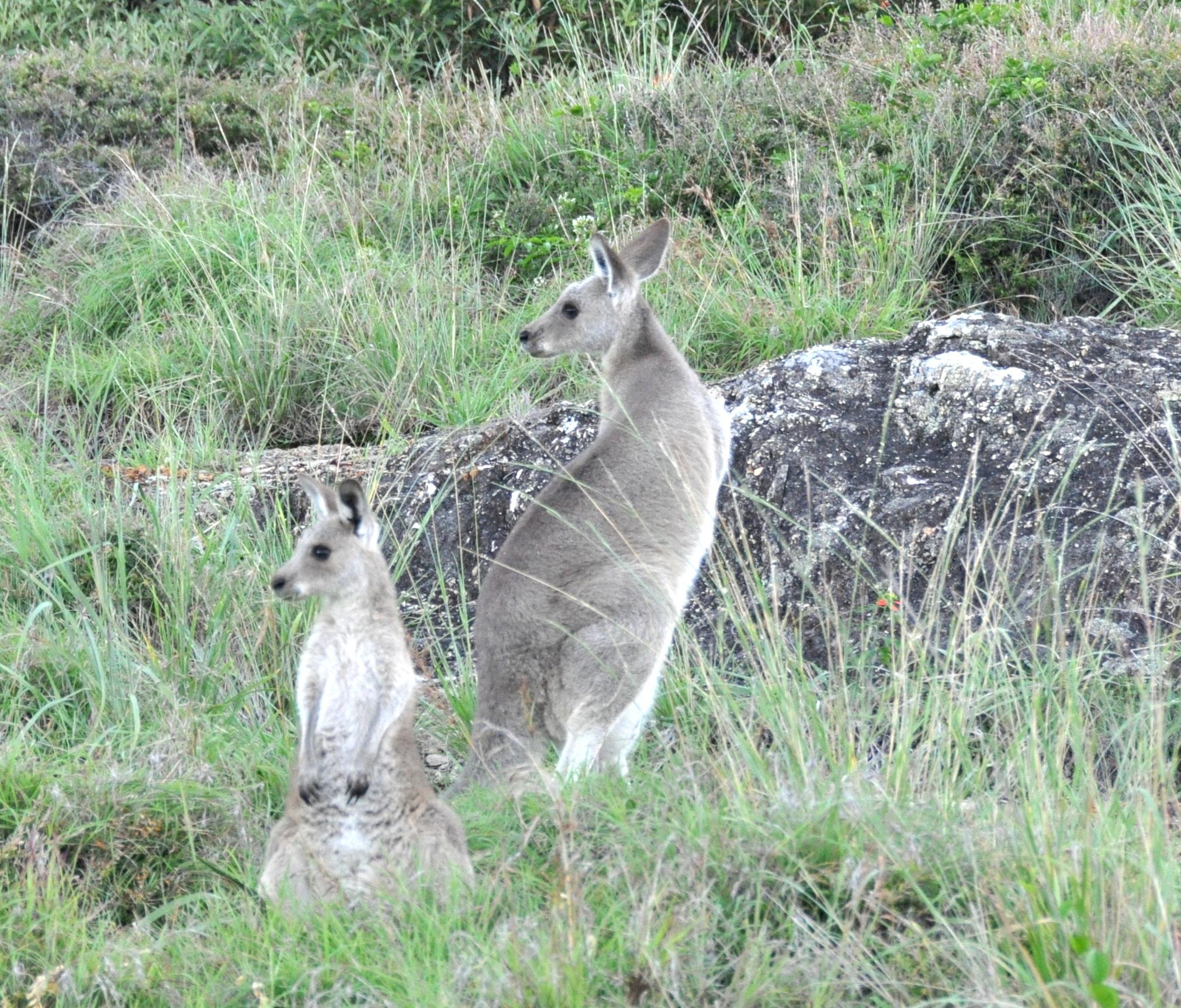 Kangaroo Cliffs Cafe New Years