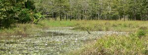 Graham's pond at full capacity