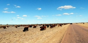Aramac to Barcaldine - on the long paddock
