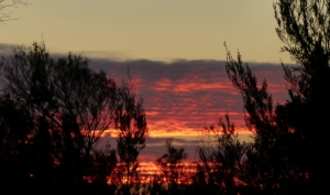 Mallee sunset
