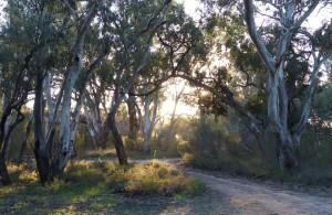 Morning light through River Reds