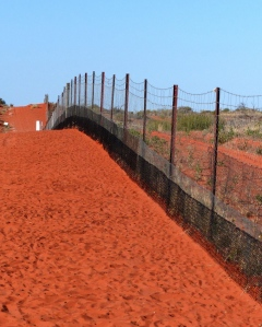The Dingo Fence 1