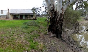 Wool classer's cottage with a lovely river view from its verandah.