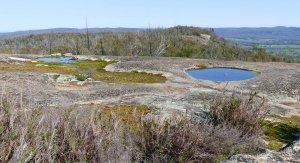 Summit vegetation