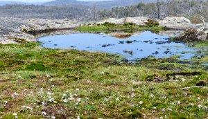 Mossy garden in the granite