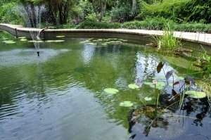 Fresh-water swimming pond with fish and plants.