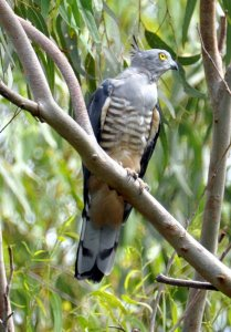 2015.07.wild_wings_swampy_things_pacificbaza-013 typical pose