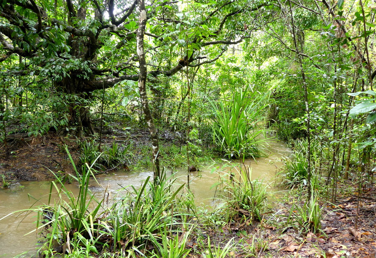 2-downstream-from-bridge