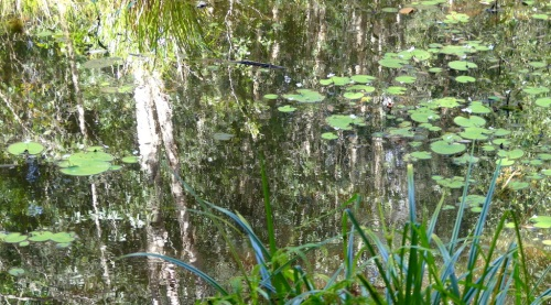 1-Swampy Reflections
