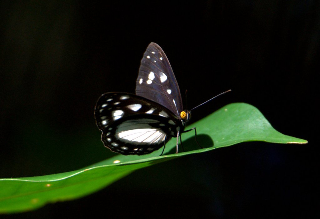 Insect Life | Wild Wings & Swampy Things